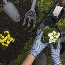 Poner al día el jardín para la primavera
